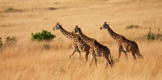 Tanzania Calling