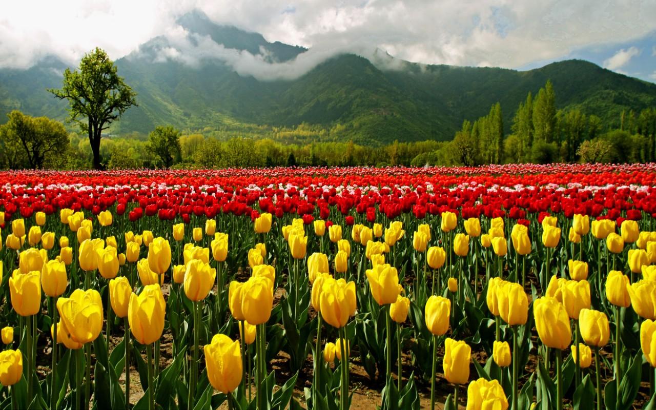Essence of Kashmir